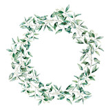 Watercolor seeded eucalyptus wreath. Hand painted eucalyptus branch and leaves isolated on white background. Floral illustration for design, print, fabric or background. - 252647823
