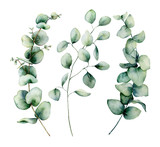 Watercolor silver dollar eucalyptus set. Hand painted baby, seeded and silver dollar eucalyptus branch isolated on white background. Floral illustration for design, print, fabric or background. - 252647845