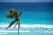 single coconut tree in front of colorful blue Caribbean Sea