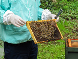 A frame of bees and wax covered in bees being held by the beekeeper