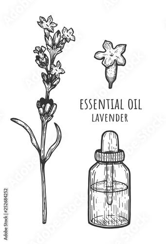 Essential oil of lavender. lavender flower, hand drawing. Vector illustration, Pipette - 252684252