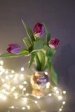 Fototapeta Tulips - Tulipany 2 © Izabela