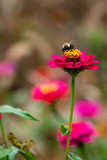 Bee on flower 10