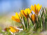 Frühlingsblüher im Park