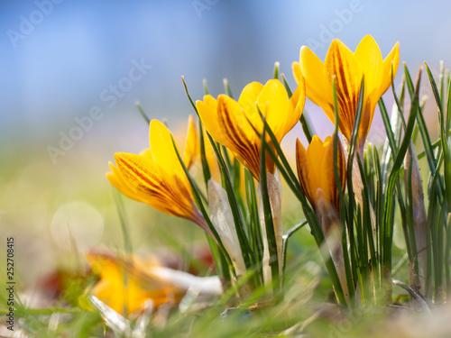 Frühlingsblüher im Park © Anja Götz