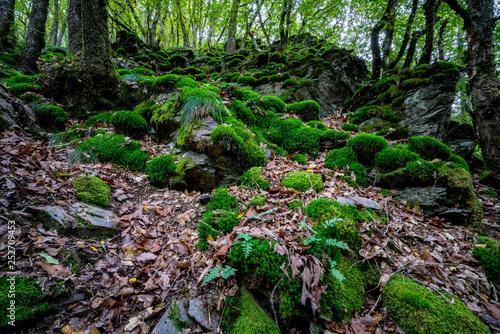 Wald mit Moos und Laub - Natur