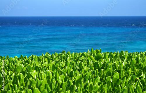 obraz PCV green leaves and blue sea under Caribbean sunlight