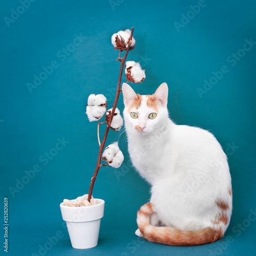 chat blanc et roux pose avec une fleur de coton devant un fond bleu vert