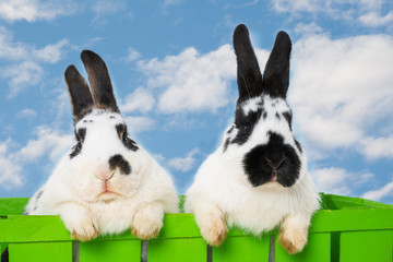Rabbits with sky background in a basket