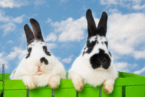 Rabbits with sky background in a basket © DoraZett
