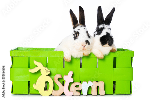 obraz PCV Rabbits in a green basket