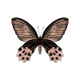 Hand drawn butterfly - 252869215