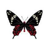 Hand drawn Crimson Rose butterfly - 252869219