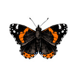 Hand drawn red admiral butterfly - 252869247