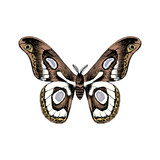 Hand drawn black and white butterfly - 252869274