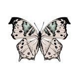 Hand drawn salamis parchassus - Mother-of-Pearl - butterfly - 252869297