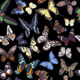 Seamless pattern with hand drawn butterflies - 252869402