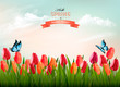 Spring nature background with colorful flowers and a butterfly. Vector.