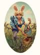 easter egg babe