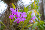 Close-up Of beautiful purple orchids.