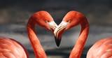 Flamingo Vogel Rosa Pink Tiere