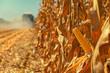 Leinwanddruck Bild - Combine harvester is harvesting corn crops