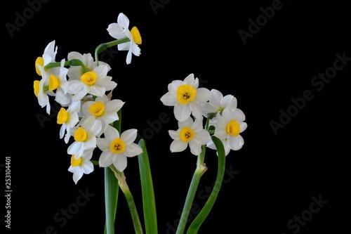 Flowers - 253104401
