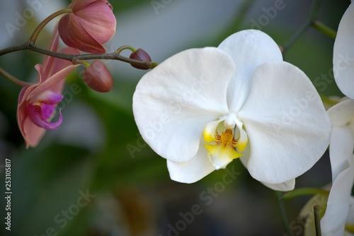 Flowers - 253105817