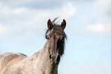 Fototapeta Konie - Pferd (Equus) © gebut