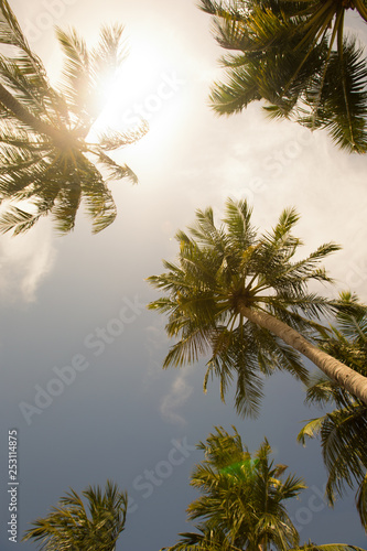 Palm trees against blue sky, Palm trees at tropical coast