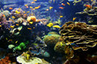 Leinwanddruck Bild - Colorful real photo of the seabed, an aquatic environment, with lots of different fish species.