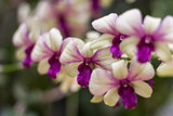 Orchid flower in tropical garden. Selective focus. Close up. Floral background.