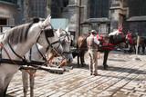 Fototapeta Konie - vienna centro della città © francescodemarco