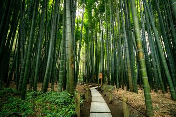 Japan Zen Bamboo Garden  © Jacques Chan