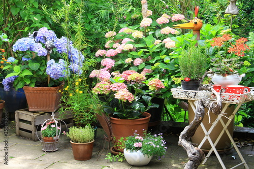 Leinwanddruck Bild hortensien