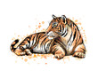 Portrait of a lying tiger from a splash of watercolor
