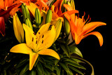 Orange and Yelllow Day Lilies