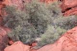 Red rock desert