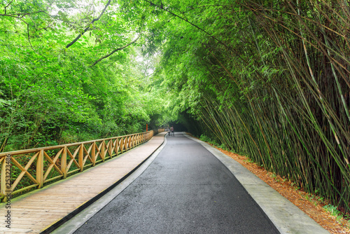Amazing road among green bamboo woods. Road through forest
