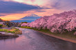 Mountain fuji in cherry blossom season during sunset.