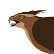 eagle head,vector illustration , flat style