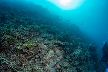 Reef Dead coral bleaching in indonesia