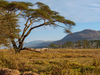 African savannah landscape near Nakuru Lake, Kenya, South Africa.