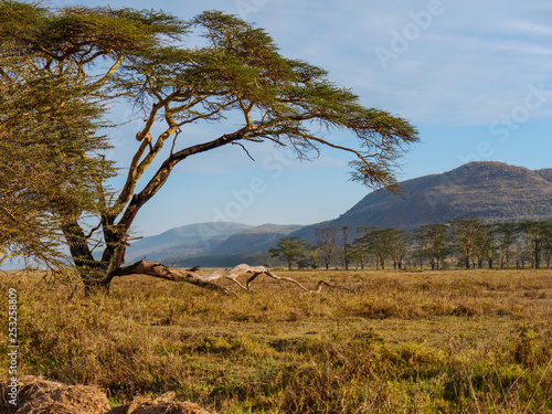 African savannah landscape near Nakuru Lake, Kenya, South Africa. © Nejron Photo