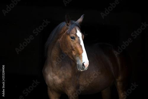 Horse portrait isolated  on black background - 253284406