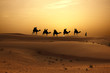 Leinwanddruck Bild - Sunset in desert with camel caravan silhouette on sand dunes