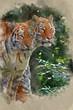 Watercolour painting of Bengal tiger panthera tigris tigris