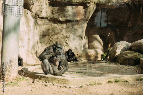 chimpanzees sitting on sun in zoological park, barcelona, spain - 253296824