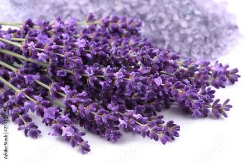 Bouquet of lavender. - 253345639