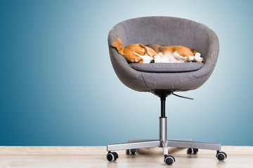 Cozy office furniture
